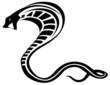 cobra snake - 61490568