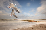 Fototapety Möwen am Meer