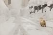 Cane sulla neve in attesa del padrone