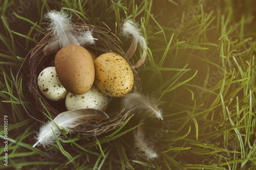 Nest with speckled eggs in the grass