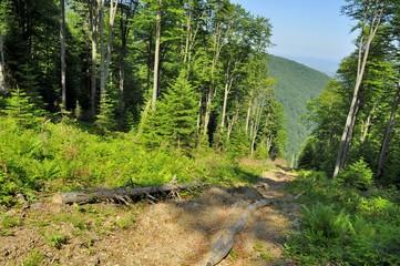Forest Exploitation path