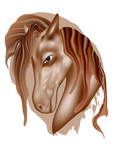 horse head portrait