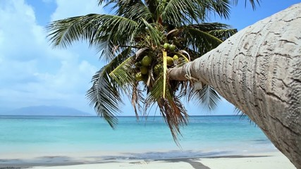 Tropical Paradise at Samui with palm  tree on the beach