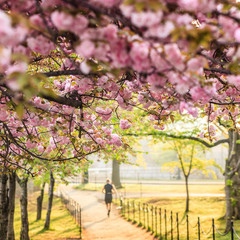 Cherry Blossom Festival. Washington, DC
