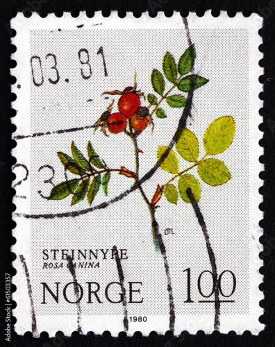 Postage stamp Norway 1980 Dog Rose, Deciduous Shrub