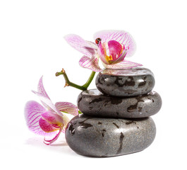 Zen stones with orchid and ladybird. Isolated on white backgroun