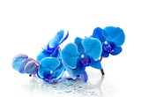 Blue orchid with reflection in water on white background
