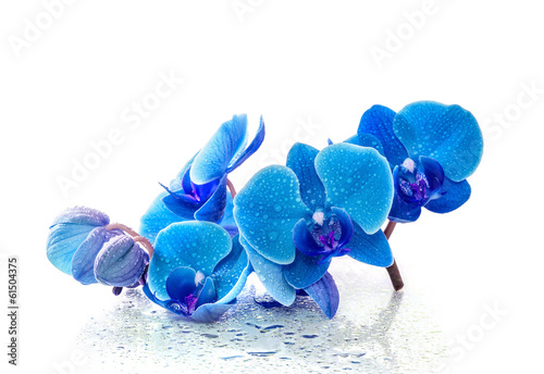 Fotobehang Orchidee Blue orchid with reflection in water on white background