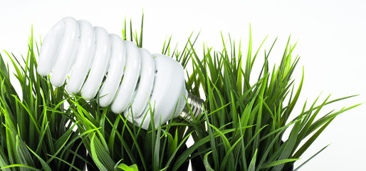 Energy saving  light bulb in green grass