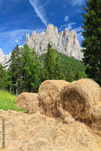 alpine pasture in Dolomites - Mt Catinaccio