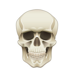 Human skull vector illustration