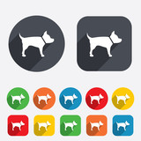 Dog sign icon. Pets symbol.