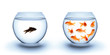 fish in solitude - diversity  concept, racism and isolation