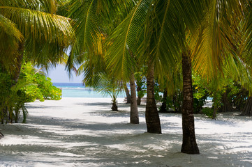 Palms on beach with white sand. Summertime at paradise place at