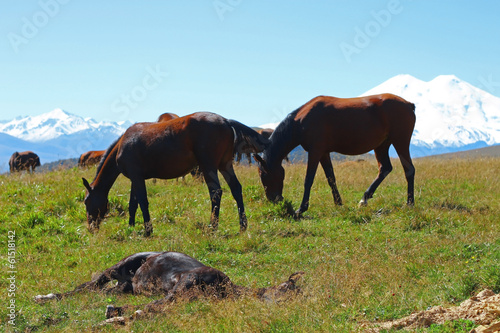 Horses on the summer autumn caucasus meadow