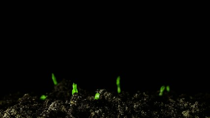 Growing green plants.4k  time lapse