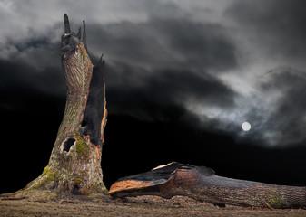 oak tree hit by lightning