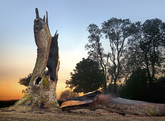 oak tree hit by lightning