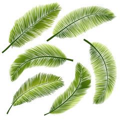 Set palm leaves on white background. Vector illustration.