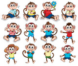 Monkeys with different emotions