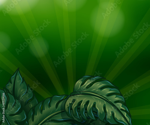 Leaves with green rays