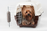 Pet carrier with dog