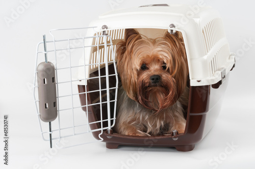 Papiers peints Porter Pet carrier with dog