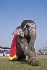 Beauty contest - Elephant festival, Chitwan 2013, Nepal