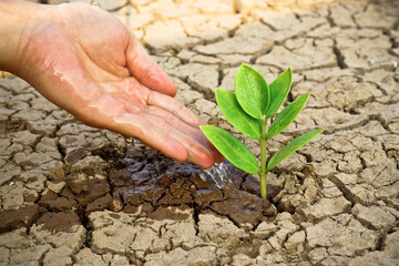 hands watering a tree on cracked earth / love nature