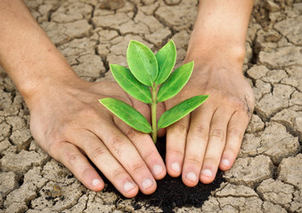 hands growing a tree on crack earth / heal the world