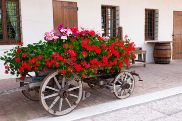 Old-fashoined trolley with geranium
