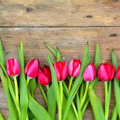 pinke Tulpenblüten auf Holzuntergrund