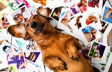"Постер, картина, фотообои ""Cute dog among the photos"""