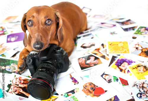 Cute dog among the photos