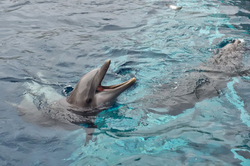 open mouth dolphin