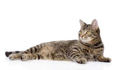 tabby cat lying and looking away. isolated on white background