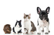 canvas print picture - Haustiere