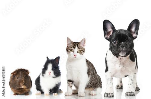 canvas print picture Haustiere
