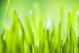 Detail of grass