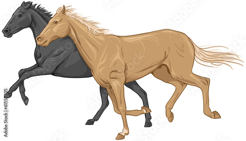 Two isolated galloping horses