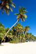 Coconut palms on white sandy beach