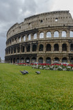 Pigeons eating in front of the Colosseum