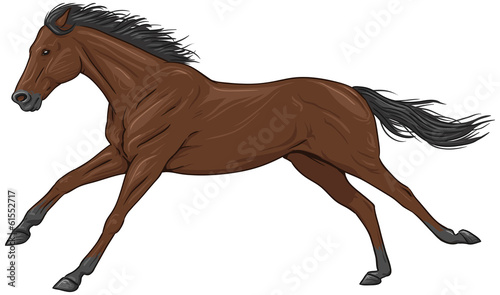 Isolated galloping brown horse