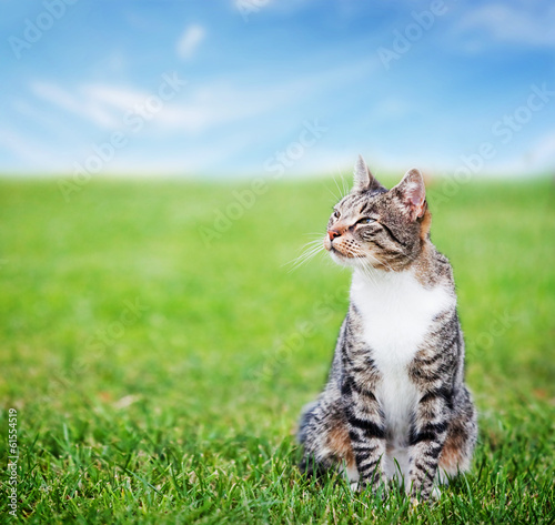 Cute cat sitting on green spring grass on sunny day