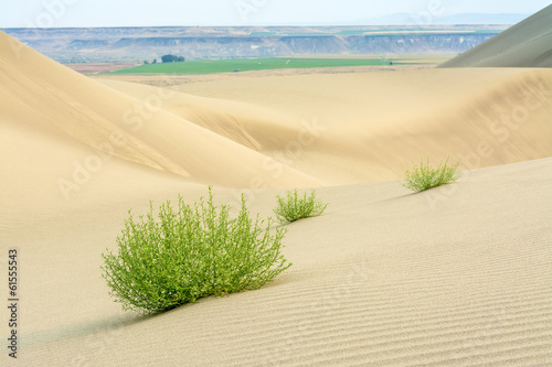 Desert sand dunes with plants