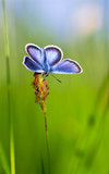 Blue butterfly on grass