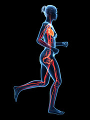 jogging woman - visible cardiovascular system