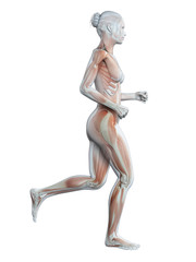 medical 3d illustration - jogging woman - visible muscles