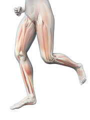 medical 3d illustration - jogging woman - visible leg muscles