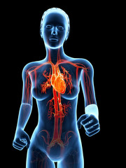 medical 3d illustration - jogging woman - visible heart